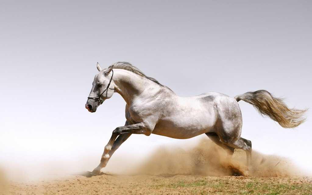 Лошади в логистике